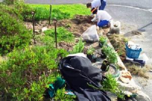 Community Indigenous Garden Initiative