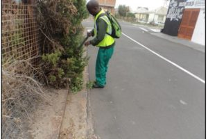 Pruning in Milner Road.